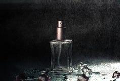 Ρόδινο άρωμα με τις πτώσεις του νερού Στοκ εικόνα με δικαίωμα ελεύθερης χρήσης