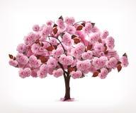 Ρόδινο δέντρο άνοιξη Στοκ Φωτογραφίες