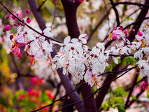 Ρόδινο δέντρο ντους στοκ φωτογραφίες