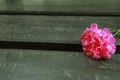 Ρόδινο γαρίφαλο στην ξύλινη καρέκλα Στοκ εικόνες με δικαίωμα ελεύθερης χρήσης