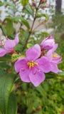 Ρόδινο ελκυστικό λουλούδι Στοκ φωτογραφία με δικαίωμα ελεύθερης χρήσης