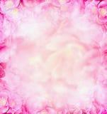 Ρόδινο θολωμένο τριαντάφυλλα υπόβαθρο φύσης στοκ εικόνα με δικαίωμα ελεύθερης χρήσης