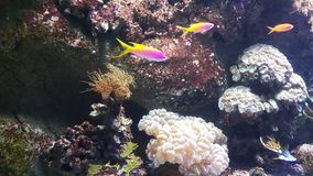 Ρόδινο κίτρινο waterworld ψαριών Στοκ φωτογραφία με δικαίωμα ελεύθερης χρήσης