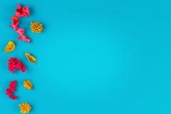 Ρόδινο και κίτρινο ξηρό πλαίσιο συνόρων εγκαταστάσεων λουλουδιών στο μπλε υπόβαθρο Η τοπ άποψη, επίπεδη βάζει Στοκ φωτογραφίες με δικαίωμα ελεύθερης χρήσης