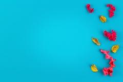 Ρόδινο και κίτρινο ξηρό πλαίσιο συνόρων εγκαταστάσεων λουλουδιών στο μπλε υπόβαθρο Η τοπ άποψη, επίπεδη βάζει Στοκ Εικόνες