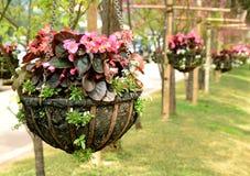 Ρόδινο κρεμώντας καλάθι λουλουδιών Στοκ εικόνα με δικαίωμα ελεύθερης χρήσης