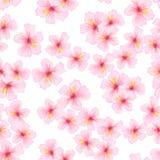 Ρόδινο λουλούδι, άνευ ραφής σχέδιο sakura Ιαπωνικό άνθος κερασιών για το υφαντικό σχέδιο υφάσματος Στοκ Εικόνες