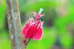 Ρόδινο λουλούδι δέντρων Στοκ Φωτογραφίες