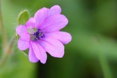 Ρόδινο λουλούδι - κινηματογράφηση σε πρώτο πλάνο στοκ φωτογραφία με δικαίωμα ελεύθερης χρήσης