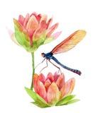 Ρόδινο λουλούδι κρίνων νερού Watercolor Στοκ Φωτογραφίες