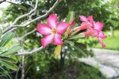 Ρόδινο λουλούδι με το υπόβαθρο θαμπάδων Στοκ Εικόνες