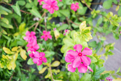 Ρόδινο λουλούδι με το υπόβαθρο θαμπάδων Στοκ Φωτογραφίες