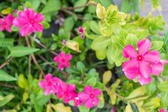 Ρόδινο λουλούδι με το υπόβαθρο θαμπάδων Στοκ φωτογραφίες με δικαίωμα ελεύθερης χρήσης