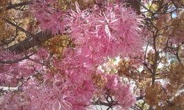 Ρόδινο λουλούδι με φύλλα του Ισημερινού Στοκ εικόνα με δικαίωμα ελεύθερης χρήσης