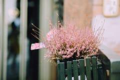 Ρόδινο λουλούδι σε ένα ξύλινο πράσινο δοχείο Στοκ Φωτογραφία