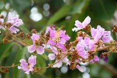 Ρόδινο λουλούδι στο δέντρο Στοκ Εικόνα