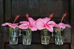 Ρόδινο λουλούδι στο γυαλί Στοκ Εικόνα