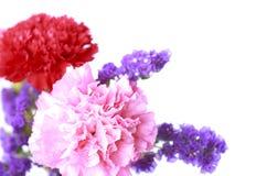 Ρόδινο λουλούδι στο μαλακό ύφος χρώματος - εικόνα αποθεμάτων Στοκ Εικόνα