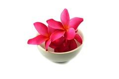 Ρόδινο λουλούδι στο φλυτζάνι Στοκ εικόνα με δικαίωμα ελεύθερης χρήσης