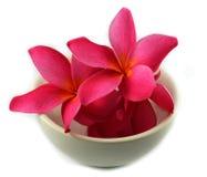 Ρόδινο λουλούδι στο φλυτζάνι Στοκ εικόνες με δικαίωμα ελεύθερης χρήσης