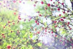 Ρόδινο λουλούδι του Μπους με το φως του ήλιου Στοκ φωτογραφία με δικαίωμα ελεύθερης χρήσης