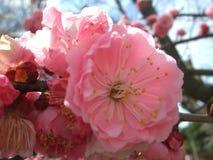 Ρόδινο λουλούδι @ φυσικό στοκ εικόνες