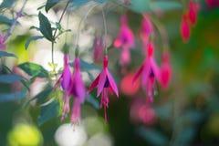 Ρόδινο λουλούδι Στοκ φωτογραφία με δικαίωμα ελεύθερης χρήσης