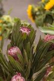Ρόδινο λουλούδι protea πριγκηπισσών grandiceps Στοκ φωτογραφία με δικαίωμα ελεύθερης χρήσης