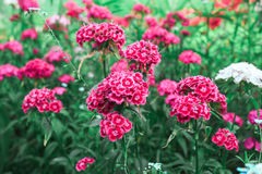 Ρόδινο πράσινο υπόβαθρο λουλουδιών Στοκ φωτογραφία με δικαίωμα ελεύθερης χρήσης