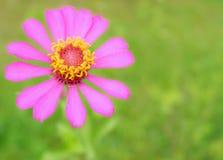 Ρόδινο πράσινο υπόβαθρο λουλουδιών Στοκ εικόνα με δικαίωμα ελεύθερης χρήσης
