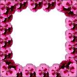 Ρόδινο πλαίσιο λουλουδιών Στοκ εικόνα με δικαίωμα ελεύθερης χρήσης