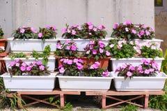 Ρόδινο ράφι καλλιεργητών δοχείων λουλουδιών άνθισης στοκ φωτογραφία με δικαίωμα ελεύθερης χρήσης