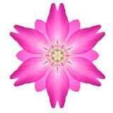 Ρόδινο σχέδιο καλειδοσκόπιων διακοσμήσεων λουλουδιών Mandala που απομονώνεται Στοκ Εικόνες