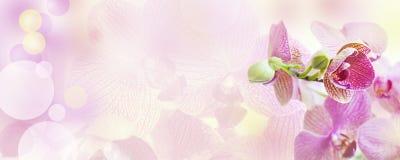 Ρόδινο υπόβαθρο με τα λουλούδια ορχιδεών στοκ εικόνες με δικαίωμα ελεύθερης χρήσης