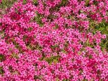 Ρόδινο υπόβαθρο λουλουδιών Στοκ Εικόνες