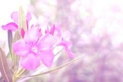 Ρόδινο υπόβαθρο λουλουδιών Στοκ Εικόνα