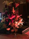 Ρόδινο φως λουλουδιών επάνω Στοκ Φωτογραφία