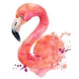 Ρόδινο φλαμίγκο Watercolor Στοκ Φωτογραφίες