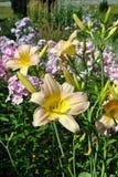Ρόδινο Hemerocallis Catherine Woodberry Στοκ Εικόνες