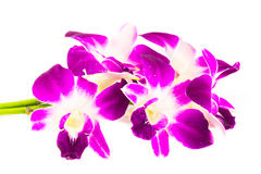Ρόδινο Orchid λουλούδι στοκ εικόνες