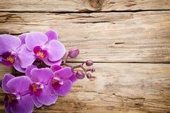 Ρόδινο Orchid λουλούδι Στοκ εικόνες με δικαίωμα ελεύθερης χρήσης