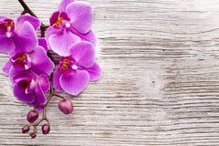 Ρόδινο Orchid λουλούδι Στοκ εικόνα με δικαίωμα ελεύθερης χρήσης