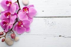 Ρόδινο Orchid λουλούδι Στοκ Φωτογραφία