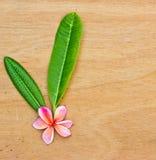 Ρόδινο Plumeria στο ξύλινο πάτωμα. Στοκ Εικόνα