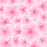 Ρόδινο Plumeria, σχέδιο Frangipani (λουλούδι) διανυσματική απεικόνιση