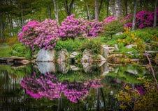 Ρόδινη rhododendron άνθιση την άνοιξη Στοκ εικόνα με δικαίωμα ελεύθερης χρήσης