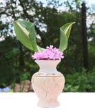 ρόδινο vase λουλουδιών στοκ φωτογραφία με δικαίωμα ελεύθερης χρήσης