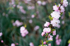 Ρόδινο Wildflowers Στοκ Εικόνες