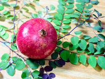 Ρόδι και πράσινα φύλλα στοκ εικόνες