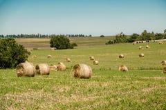 Ρόλοι γεωργίας Στοκ Εικόνες